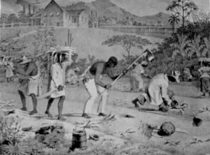 Slaves working in the field