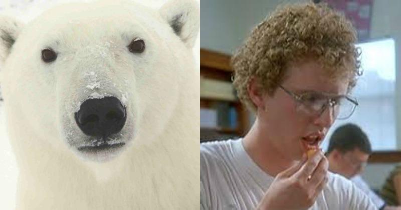 polarbearnapoleon