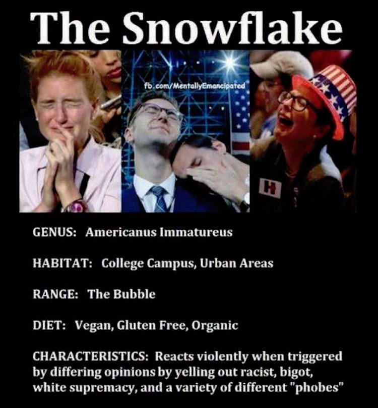 The Snowflake Hilariously Summed Up By This Brilliant Meme