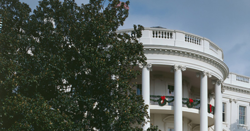 Iconic 150 Year Old White House Tree To Be Cut Down