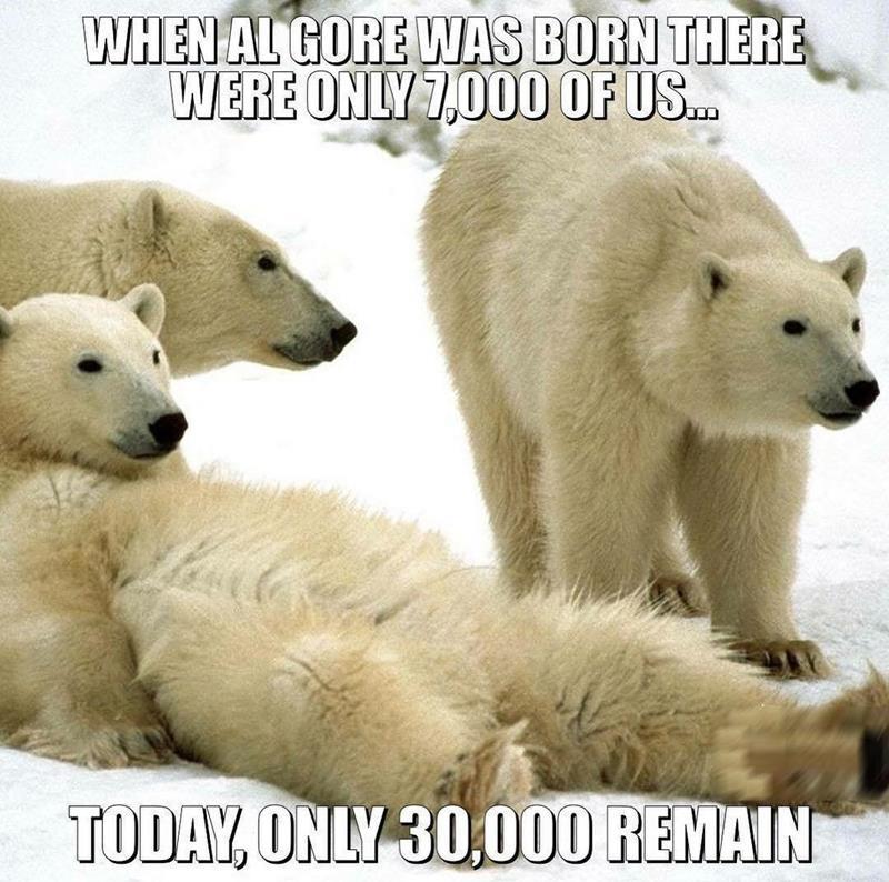 Hilarious Polar Bear Meme Destroys Democrats Global Warming Claims