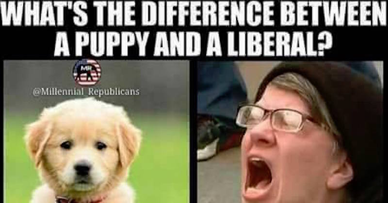 Joke: What's The Difference Between a Liberal And a Puppy?
