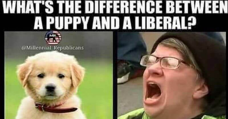 Hilarious: What's The Difference Between a Liberal And a Puppy?